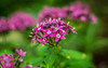 Happy Bokeh Wednesday (Jims_photos) Tags: texas unitedstates outdoor outside adobelightroom adobephotoshop shadows daytime flowers jimallen jimsphotos jimsphotoswimberleytexas lightroom landscape nopeople nikond750