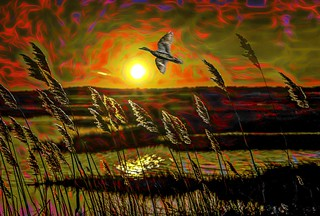 Reeds in Sunset with Bird and Red Sky