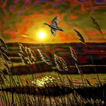 Reeds in Sunset with Bird and Red Sky thumbnail