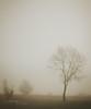 2 of my fave things.. (Samantha Nicol Art Photography) Tags: mist fog tree lone samantha nicol art scotland glengarnock