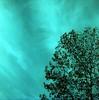 Turchese (Maria Evgenidu) Tags: yashicamat124 lomography lomo 6x6 120 squareformat mediumformat lomographyrx50200 expired film expiredfilm fotografiaanalogica filmisnotdead finchècèpellicolacèsperanza filmisawasteoftime filmroll analogue analog analogica analogphotography analogpassion thefilmexperience theanalogproject thefilmcommunity truegrain tlr staybrokeshootfilm clouds turquoise turquoisesky trees riccione aboutme