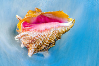 Seashell in the Waves