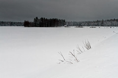 Branches in the Snow (k009034) Tags: 500px trees sky landscape forest winter nature clouds scene branches snow fields countryside weather frost rural covered no people coldness cold temperature day finland outdoors tranquil scandinavia copy space teamcanon