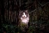 Wild cat (Yaoluca) Tags: cat wild forest wood animals pet nopeople life nature green