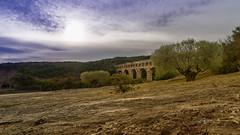 2017 Old Olive Trees (jeho75) Tags: sony ilce 7m2 france frankreich pont du gard olivenbäume olive trees provence winter landscape roman architecture architektur historic aqueduct