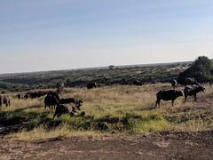 2017-12-28 17.29.04 (dcwpugh) Tags: travel nairobi kenya safari nairobinationalpark