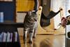 cat (NEKOFighter) Tags: cat neko miaw nikon japan ねこ 猫 one