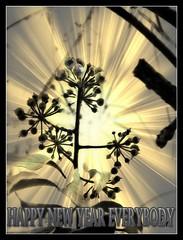 Happy New Year (patrick.verstappen) Tags: happynewyear newyear texture textured twitter belgium gingelom google garden grass d7100 sigma stillife winter ipernity ipiccy imagine inspiration photo picassa pinterest pat picmonkey nikon nature sun sunrays patrickverstappen nielbijsinttruiden lovely limburg look love leafs december