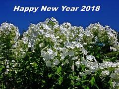 Wünsche allen ein schönes, glückliches und gesundes Jahr 2018! Wish you all a nice, happy and healthy year 2018! (fleckchen) Tags: phlox garten natur himmel blau blumen blüten blooms weiseblüten stauden flammenblumen sperrkrautgewächse zierpflanze pflanzen