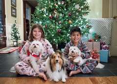 Christmas 2017 (28 of 48) (Quentin Biles) Tags: 2435 art ava cassie d850 jayden lily nikon poodles sigma