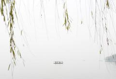 Westlake 西湖 (MelindaChan ^..^) Tags: westlake 西湖 tree lake watrer chanmelmel mel melinda melindachan hangzhou china 杭州 relfection boat