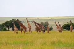 DDR_4068 (Santiago Sanz Romero) Tags: kenya wildlife animales ngc