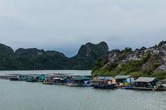 Plavba zátokou Halong (zcesty) Tags: vietnam17 vesnice skála moře loď krajina vietnam halong dosvěta hảiphòng vn