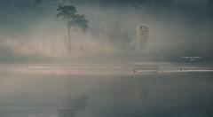 Angled connections (Ingeborg Ruyken) Tags: dropbox autumn zonsopkomst sunrise dawn oisterwijksevennen fall flickr herfst ochtend trees rayoflight 2017 bomen oktober 500pxs natuurfotografie fog morning october mist