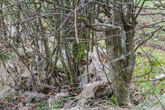 DSC_2929 (Adrian Royle) Tags: lincolnshirewolds lincolnshire bimble rural field hedge plastic path walk nikon