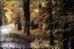 La veredita (seguicollar) Tags: vereda veredita árbol troncos leaf ramas hojas leaves claro bosque planta vegetal dorado imagencreativa photomanipulación art arte artecreativo artedigital virginiaseguí otoño oros primerosoros