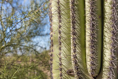 Cactus (davebentleyphotography) Tags: davebentleyphotography 2017 arizona canon catus desert travel