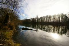 Wintersonne (Lutz Blohm) Tags: altrheinarm altrhein naturfoto moos baumstümpfe wintersonne zeissbatis18mmf28 sonyalpha7aii