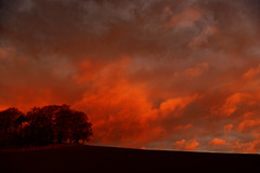 Reflective sunrise. (alan.irons) Tags: skyscape trees reflective light red sky field formation clouds morning sunrise westernsky canoneos1dxmkll kirriemuir angus scotland