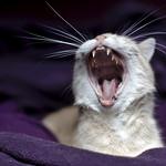 Yawning thumbnail