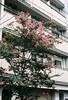 (nikki.lake) Tags: filmisnotdead gion flowers analogue analog film canon canonae1 pink japan kyoto portra160 kodakportra portra 35mm