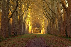 Enchanted place (Vak Photos) Tags: trees path forest woods portal winter light nature