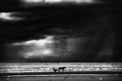 gig under sky (vetlife2005) Tags: sky gig horse seascape waterscape atlantic normandie normandy shoreline dark darkmood run france landscape blackandwhite