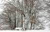 Rennsteig trail near Masserberg in Thüringer Forrest (Felix Ott) Tags: snow schnee thüringerwald thüringen masserberg rennsteig trees bäume white weis äste branches happynewyear nature
