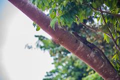 Kinabatangan River (Phalinn Ooi) Tags: sepilokorangutanrehabilitationcentre sunbear sepilok rainforestdiscoverycentre rainforest jungle wildlife sandakan kinabatangan river sukau bilit sabah borneo malaysia asia nature outdoor adventure safari holiday animal orangutan proboscis monkey silverleaf lutung langur snake monitorlizard boat labukbay resort canon eos dslr photography egret bird wanderlust travel family beautiful view love wife trekking macro flower insect tree forest 5dmarkiv beardedpig water cruise alam world scenery flora fauna megadiverse biodiversity landscape people sexy woman naturalist biology coutinho visitmalaysia myneresort