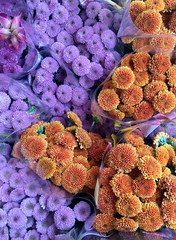 Market Flowers (cowyeow) Tags: china chinese asian asia 香港 shop store plants flowers composition color hongkong flowermarket arrangement spring springmarket street flower orange purple