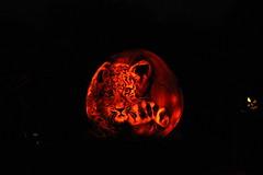 IMG_6517 (comtrag) Tags: jackolanterns rogerwilliamszoo rhodeisland halloween pumpkins pumpkincarving