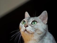 Looking up.. (h329) Tags: cat m34 omd em5 mzuiko 45mm f18