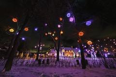 Christmas Balls (wilbias) Tags: evening night lights winter snow christmas colours balls trees bright niagara lake ontario canada house
