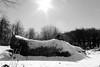 Souche d'hiver BG (ZUHMHA) Tags: bulgarie bulgaria hiver winter tree sky neige snow buzludja soleil sun souche paysage landscape horizon nature monochrome