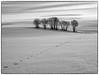Winter Scenery (b&w ver.) (Krogen) Tags: norge norway norwegen akershus romerike ullensaker hovin krogen winter vinter landscape landskap olympusep2 svarthvitt svhv blackwhite bw silverefexpro