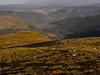 A View Across Cowal - Beinn Mhor Oct 2017 (GOR44Photographic@Gmail.com) Tags: beinnmhor beinn mhor hill mountain cowal argyll scotland sunlight shadows mountains trees gor44 grass omdem5 olympus 1240mmf28 fence