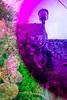 20171030-119 (sulamith.sallmann) Tags: pflanzen blur botanik effect effekt filter folie folientechnik italia italien italy kaktus lamp lampe laterne mauer messina pflanze plants sizilien stein stone tindari tyndaris unscharf wall it sulamithsallmann