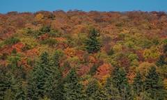 Cap Tourmente colour (keithhull) Tags: trees autumn colour captourmente quebec canada 2017 explore