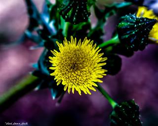 Macro Yellow