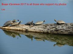 Happy Christmas (LPJC) Tags: christmas 2017 turtles arcc lakesoledad lpjc