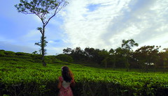 Omera in tea garden (faruqlib) Tags: tea sky landscape omar17 bangladesh