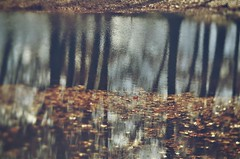 A Year in Reflection 52.52 (New Expressions by the Old Christine) Tags: reflection water pond wingfootlakestatepark trees leaves ohio oh calm