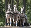 Riesenbeck Fahrturnier (ow54) Tags: fahrturnier fahrsport driving horses pferde schimmel gespann vierergespann vierspänner carriage