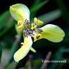 @ BALI BOTANIC GARDEN (fabiogis50) Tags: bali botanicgarden flower flowers fiori orchid nature