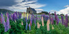 Lupins at the Church of the Good Shepherd (Sandy Brinsdon (theafterworkphotographer)) Tags: twizel central summer tekapo flickr lupins