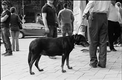 Scan-140608-0015.dng_XDOKBZ (նորայր չիլինգարեան) Tags: canoscan9000fmarkii kodakcft mamiyaze2 mamiyasekore50mm17 երեւան ժապաւէն լուսանկարներ շուն փողոց
