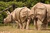 Baby Rhino (Rackelh) Tags: baby babyanimal rhino animal animals mammal grey zoo toronto canada