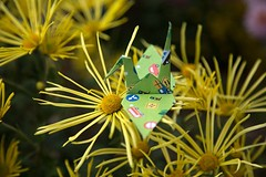 Paper Crane and Chrysanthemum (Ichigo Miyama) Tags: origami papercrane flower chrysanthemum 花 キク ツル 折り紙 おりがみ おりがみ写真 origamiphoto 菊ツルと菊 折り鶴 paper 菊