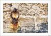 Apegos (V- strom) Tags: detalles details concepto concept color hierro iron oxide amarillo yelow muro wall pared argolla ring candados padlocks texturas textures arquitectura arquitecture nikon nikond700 nikon50mm nikon2470 portugal indanhabella redondo orbed luz light piedra stone