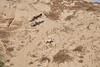 DSC_6550 (Kjell Arild Dokka) Tags: rovfugler steppeørn aquila nipalensis iran bandarabbas kostargah